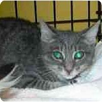 Adopt A Pet :: Polly - Arlington, VA