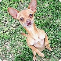 Adopt A Pet :: Manny - San Angelo, TX
