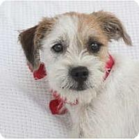 Adopt A Pet :: FELIX - san diego, CA