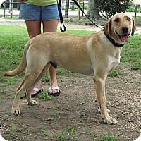 Adopt A Pet :: Drake - Spring, TX