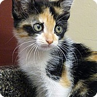 Adopt A Pet :: Maui - Chicago, IL