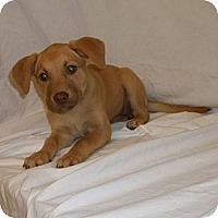 Adopt A Pet :: Hayden - South Jersey, NJ