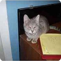 Adopt A Pet :: Doormouse - Hamburg, NY