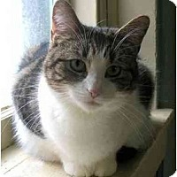 Adopt A Pet :: Rascal - Plainville, MA