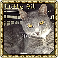 Adopt A Pet :: Little Bit - Bradenton, FL
