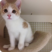 Adopt A Pet :: Jerome - Redondo Beach, CA