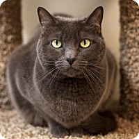 Adopt A Pet :: Sophia - Kettering, OH