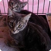Adopt A Pet :: Tabitha - Encinitas, CA