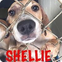 Adopt A Pet :: Shellie - Waycross, GA