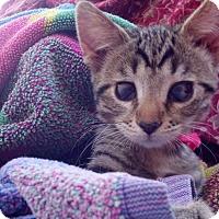 Adopt A Pet :: Itsy - Scottsdale, AZ