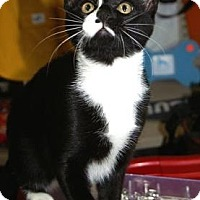 Adopt A Pet :: Eclipse - Englewood, FL