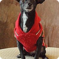 Adopt A Pet :: Aster - Henderson, NV