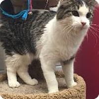 Adopt A Pet :: Vienna - Manchester, CT
