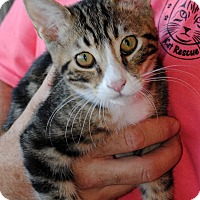 Adopt A Pet :: Stormy - Palmdale, CA