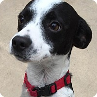 Adopt A Pet :: Lyle - San Diego, CA