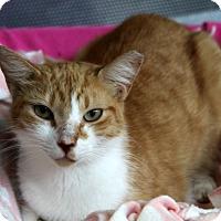 Adopt A Pet :: Booter - Sarasota, FL