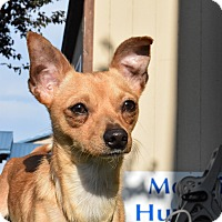 Adopt A Pet :: Reagan - Meridian, ID