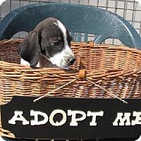 Adopt A Pet :: Nora - Oakland, AR
