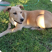 Adopt A Pet :: Lucy - Orange County, CA