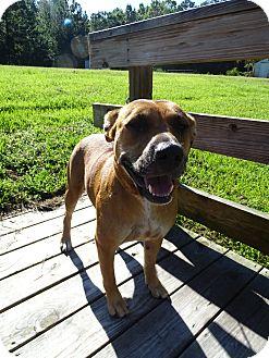 Black Mouth Cur Mix Dog for adoption in Brooksville, Florida - CALLIE