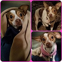 Adopt A Pet :: pookie - Newnan, GA