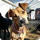 Adopt A Pet :: Lynn
