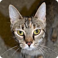 Adopt A Pet :: Rosie - Michigan City, IN