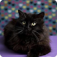 Adopt A Pet :: ONYX - Roanoke, VA
