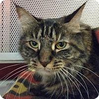 Adopt A Pet :: Ruthy - Sarasota, FL