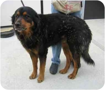 Danny | Adopted Dog | SAS_A150930 | Tracy, CA | Rottweiler ...