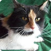 Adopt A Pet :: Scone - Ennis, TX