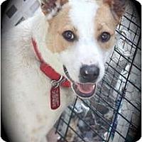 Adopt A Pet :: Clara - san diego, CA