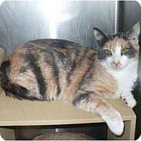 Adopt A Pet :: Heidi - Colmar, PA