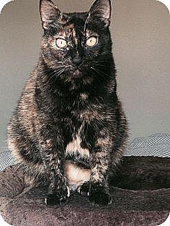Domestic Shorthair Cat for adoption in Santa Monica, California - Rosie