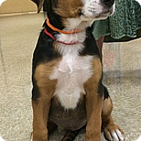 Adopt A Pet :: Ally - Phoenix, AZ