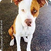 Adopt A Pet :: Junebug - Gainesville, FL