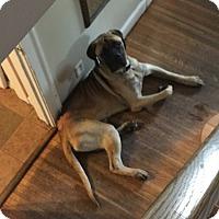 Adopt A Pet :: Rudy - O'Fallon, MO