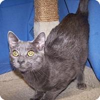 Adopt A Pet :: Duke - Colorado Springs, CO