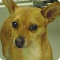 Adopt A Pet :: Pappi - Worcester, MA