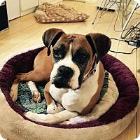 Adopt A Pet :: Angela - San Pedro, CA