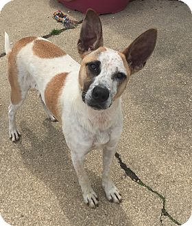 Hound (Unknown Type) Mix Puppy for adoption in Waretown, New Jersey - MAJOR