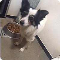 Adopt A Pet :: GALAXI - Elk Grove, CA