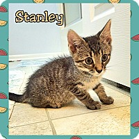 Adopt A Pet :: Stanley - Atco, NJ