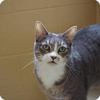 Adopt A Pet :: Xena - Chula Vista, CA