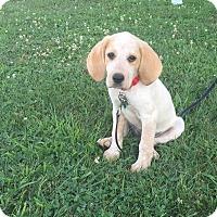 Adopt A Pet :: Fallon - New Oxford, PA