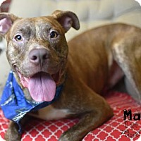 Adopt A Pet :: Mani (Lonely Heart) - Gulfport, MS