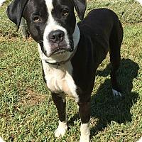 Adopt A Pet :: Ladan - Morehead, KY