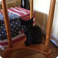Adopt A Pet :: Barry - New York, NY