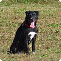 Adopt A Pet :: Delta - Lebanon, MO