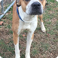 Adopt A Pet :: Bodee - Morehead, KY